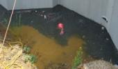 DSC00829 170x100 The Bad & Ugly Select Basement Waterproofing
