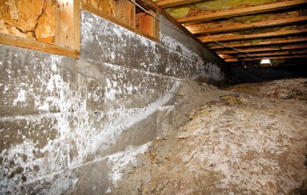 the importance of crawl space mold removal