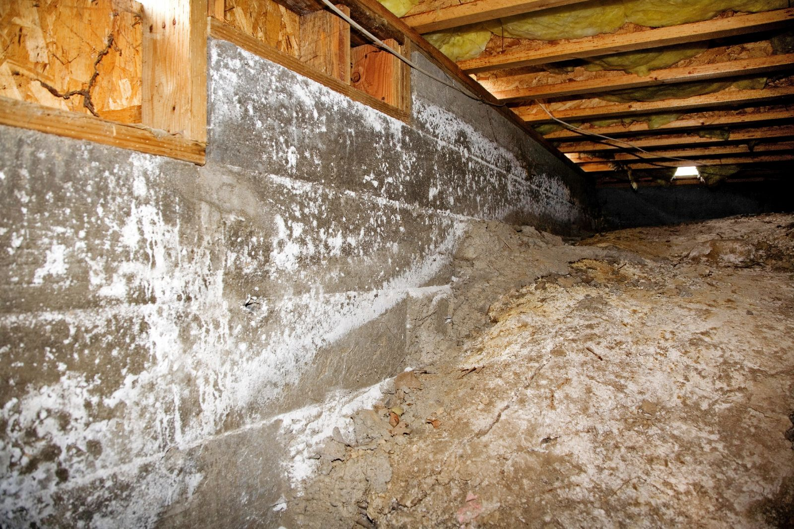 The importance of crawl space mold removal solutioingenieria Choice Image