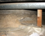 Enjoy a Healthier Home with a Crawl Space Vapor Barrier