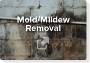 Mold Mildew Removal  Select Basement Waterproofing