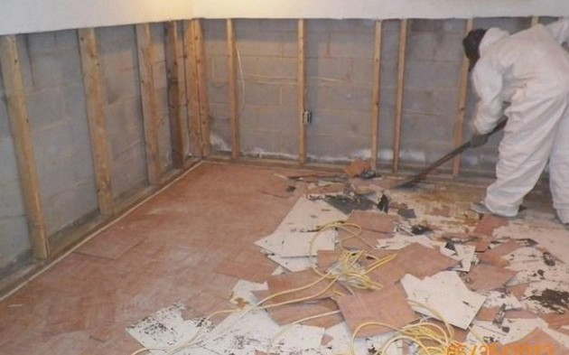 Mold Remediation and White Water Mold